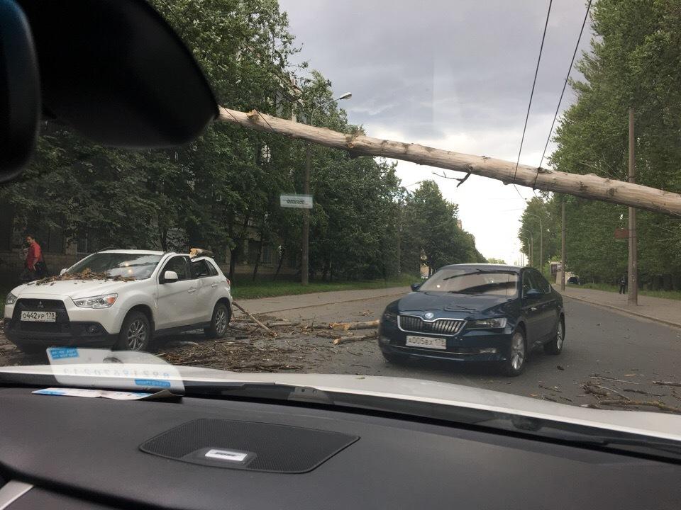 Ветер в Петербурге шатает знаки и валит деревья (Иллюстрация 2 из 2) (Фото: ДТП и ЧП)