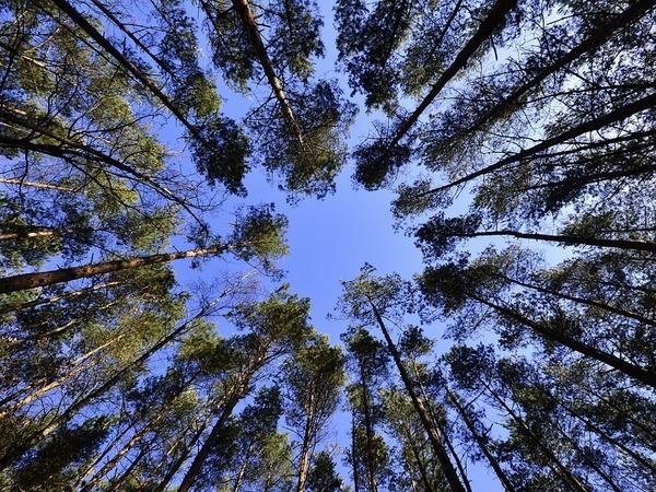 Лесная амнистия оставила лес Южному