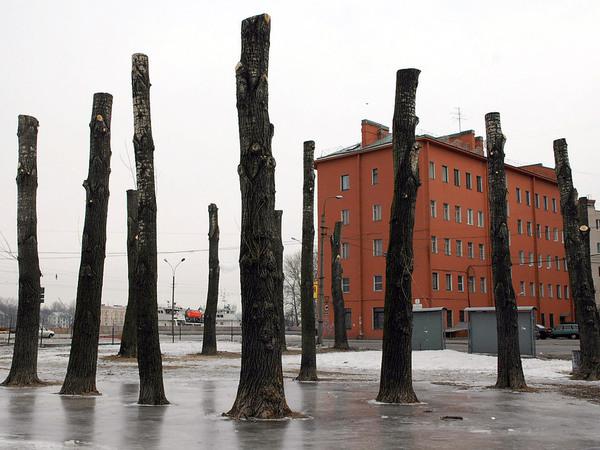 Деревья исчезают стоя