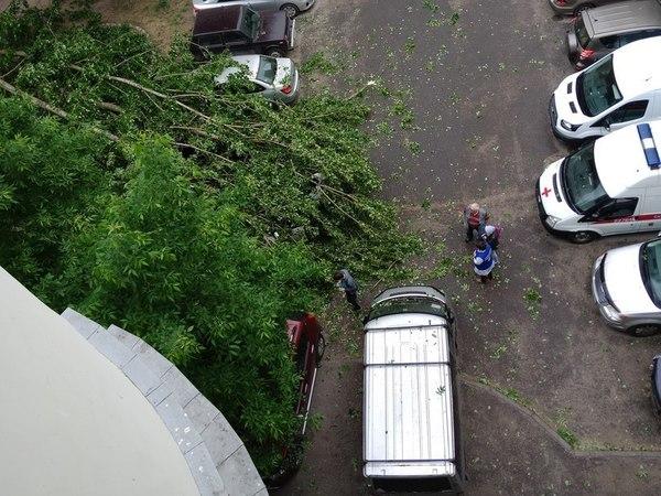 Непогода в Петербурге: ветер валит деревья, но дождь пробок не добавил