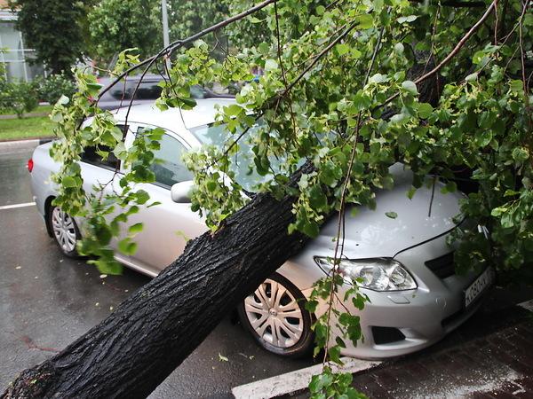 Авария оставила без света 8 тыс. граждан Ленобласти