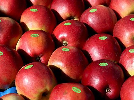 Пармезан из Чили, яблоки из Китая: где Петербург ищет замену «санкционке» через четыре года после эмбарго