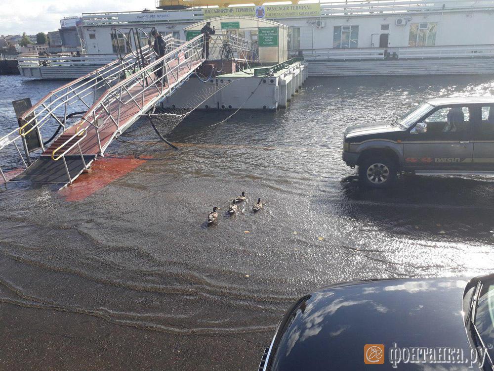 https://cdn.fontanka.ru/mm/items/2018/9/12/0051/photo_2018-09-12_11-44-52.jpg